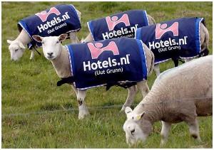 Sheep advertising